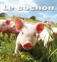 Le cochon | Dal'Secco, Emmanuelle. Auteur